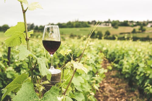 Chillwall, wine destinations